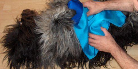 Massagedoekje voor gebruik op een huisdier.
